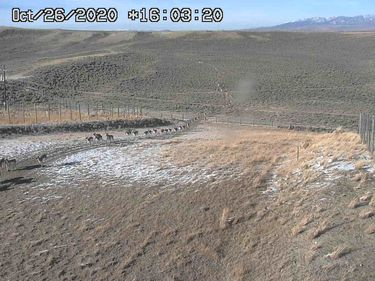 Path of the Pronghorn. Photo by Trappers Point Wildlife Overpass webcam.